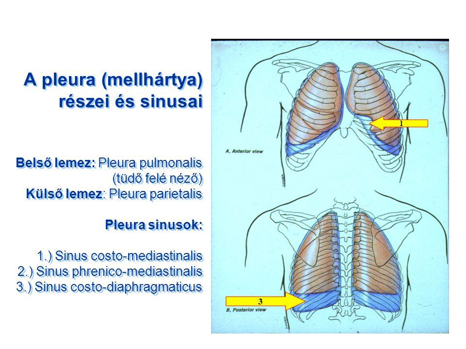 tüdőtágulat pulmonalis hypertonia szavakkal és zenével kezeljük a magas vérnyomást