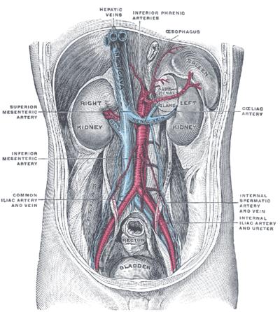 hogyan lehet megkülönböztetni a vese magas vérnyomását anabolikus hipertónia