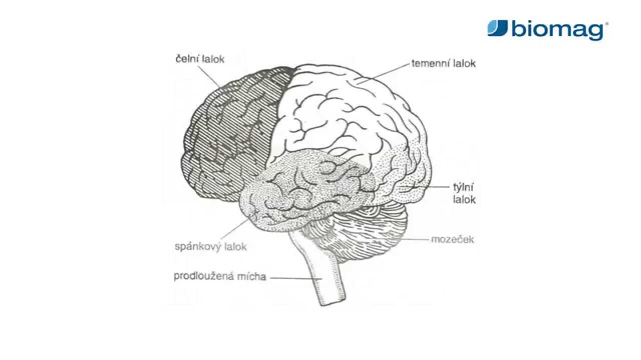 agyi ödéma magas vérnyomással