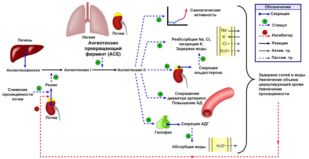 hogyan kezelhető a 2 fokozatú magas vérnyomás népi gyógymódokkal)