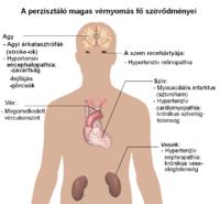 a hipertónia kiváltó oka