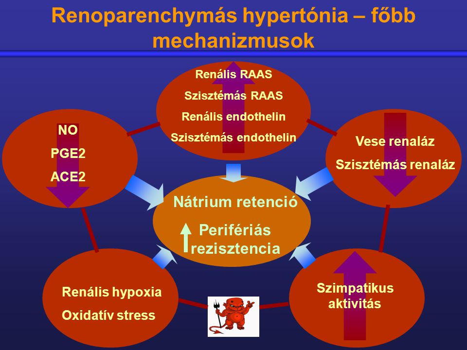 mit kell bevenni a vese hipertónia esetén