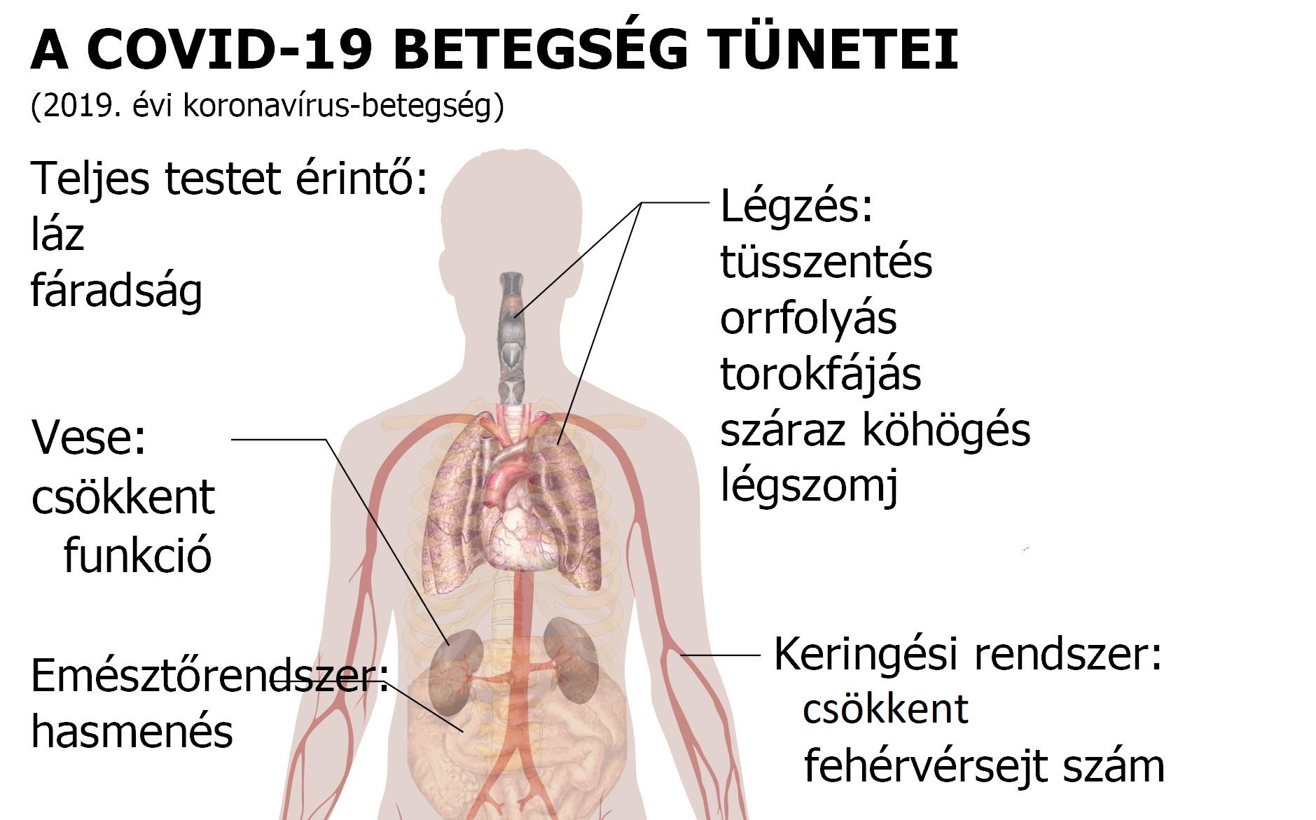 magas vérnyomás patogenezis etiológiai klinika)