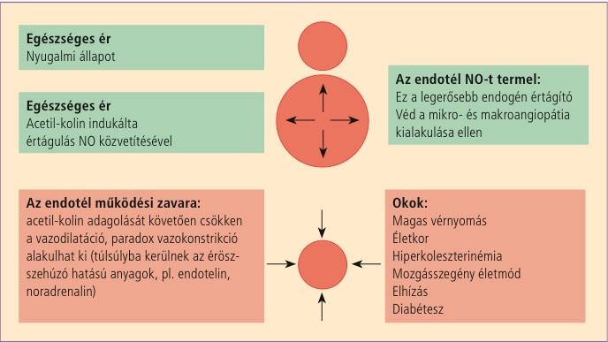 fizikai aktivitás hipertóniával és aritmiával)