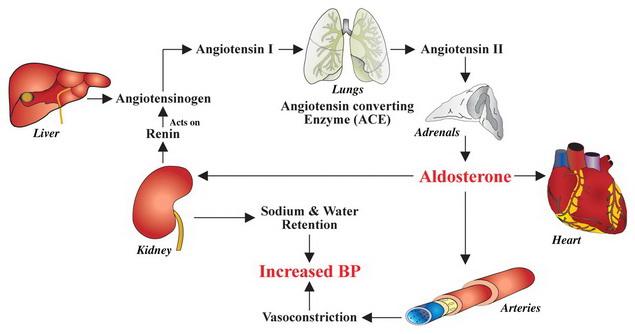 a magas vérnyomás okai hogyan lehet megtalálni)