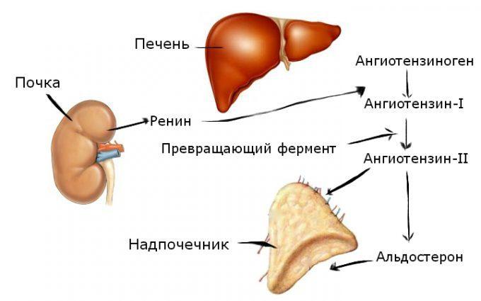 A magas vérnyomás típusai - Atherosclerosis November