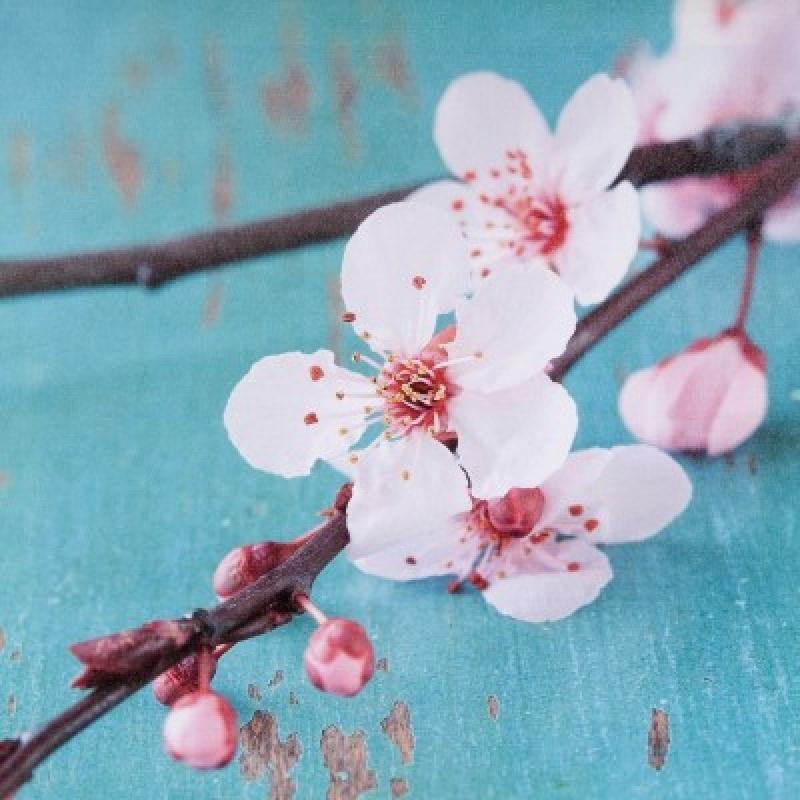 magas vérnyomás és tavasz