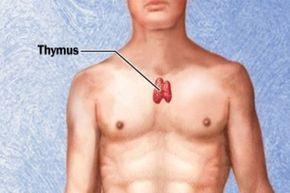 csecsemőmirigy és magas vérnyomás)