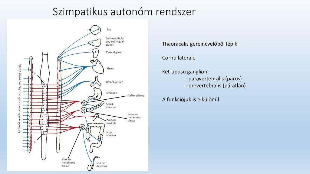 A vegetatív-vaszkuláris dystonia (VVD) kezelésére szolgáló készítmények