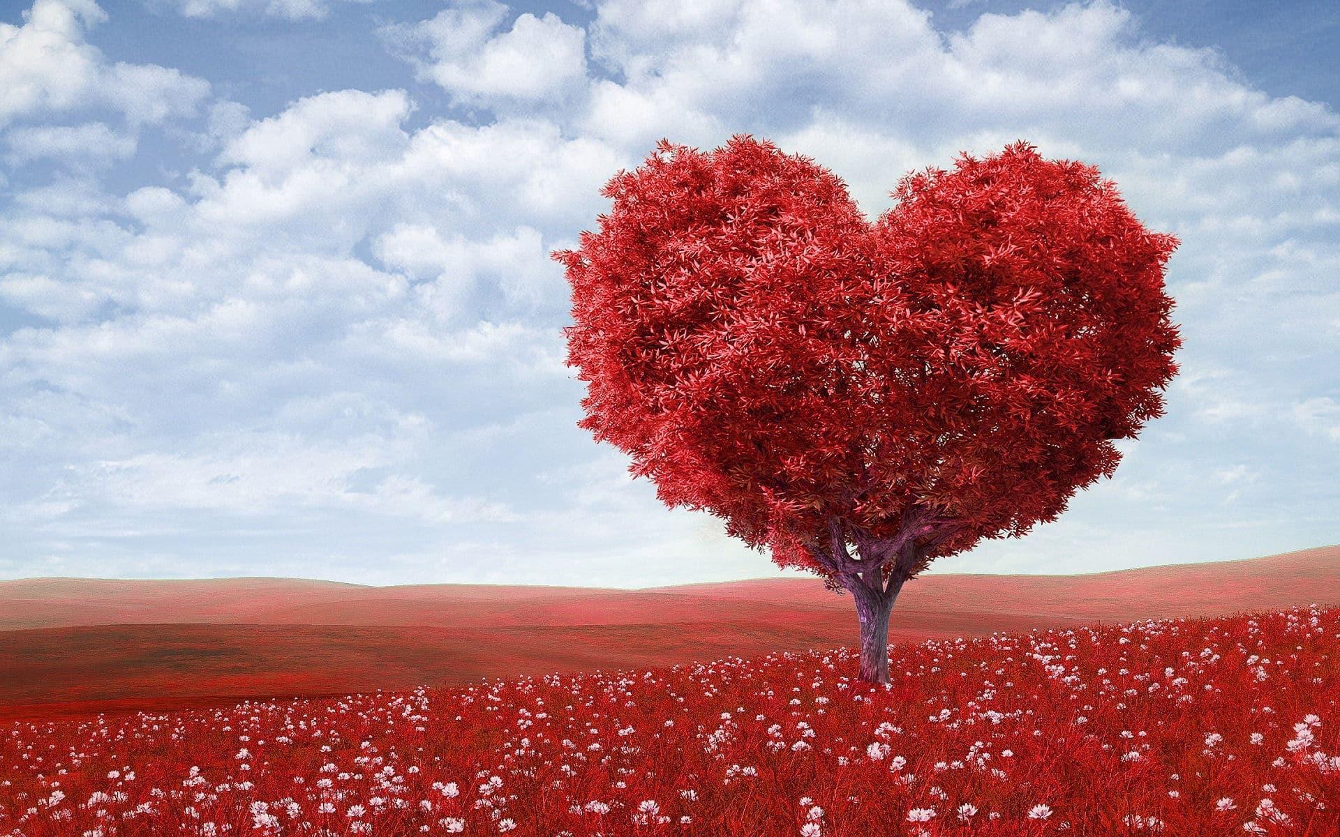 a szív ultrahangja és a magas vérnyomás)