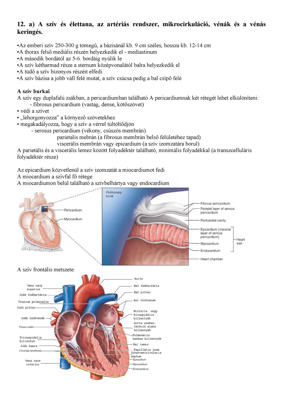 artériás vér az emberi szívben az