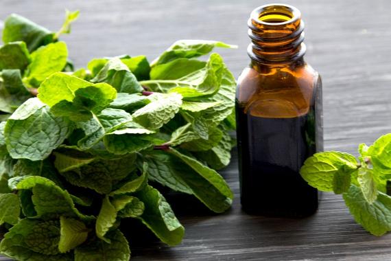 Gyógynövény kisokos - Egészségtér
