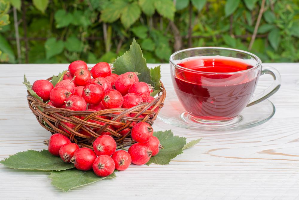 magas vérnyomás és galagonya gyógyszerek)
