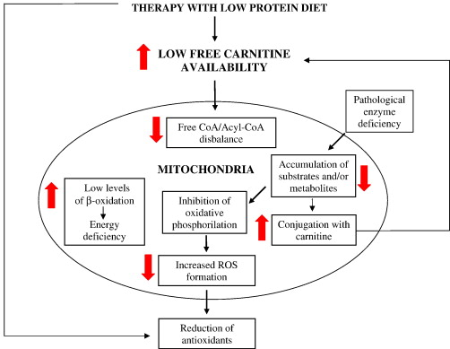 l-karnitin hipertónia diuretikumok a hipertónia mellékhatásai