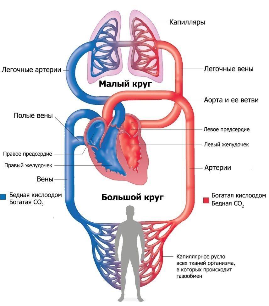 Hipertóniás típusú neurocirkulációs disztónia