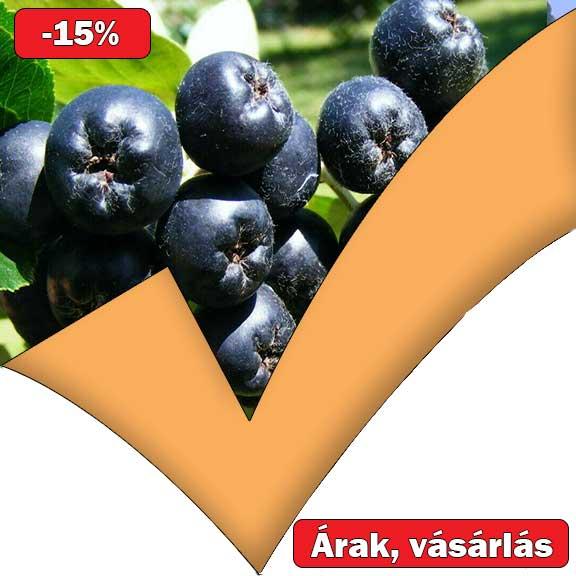 arónia a magas vérnyomás kezelésében)