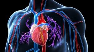 a vesék vibroakusztikus terápiája otthoni magas vérnyomás esetén