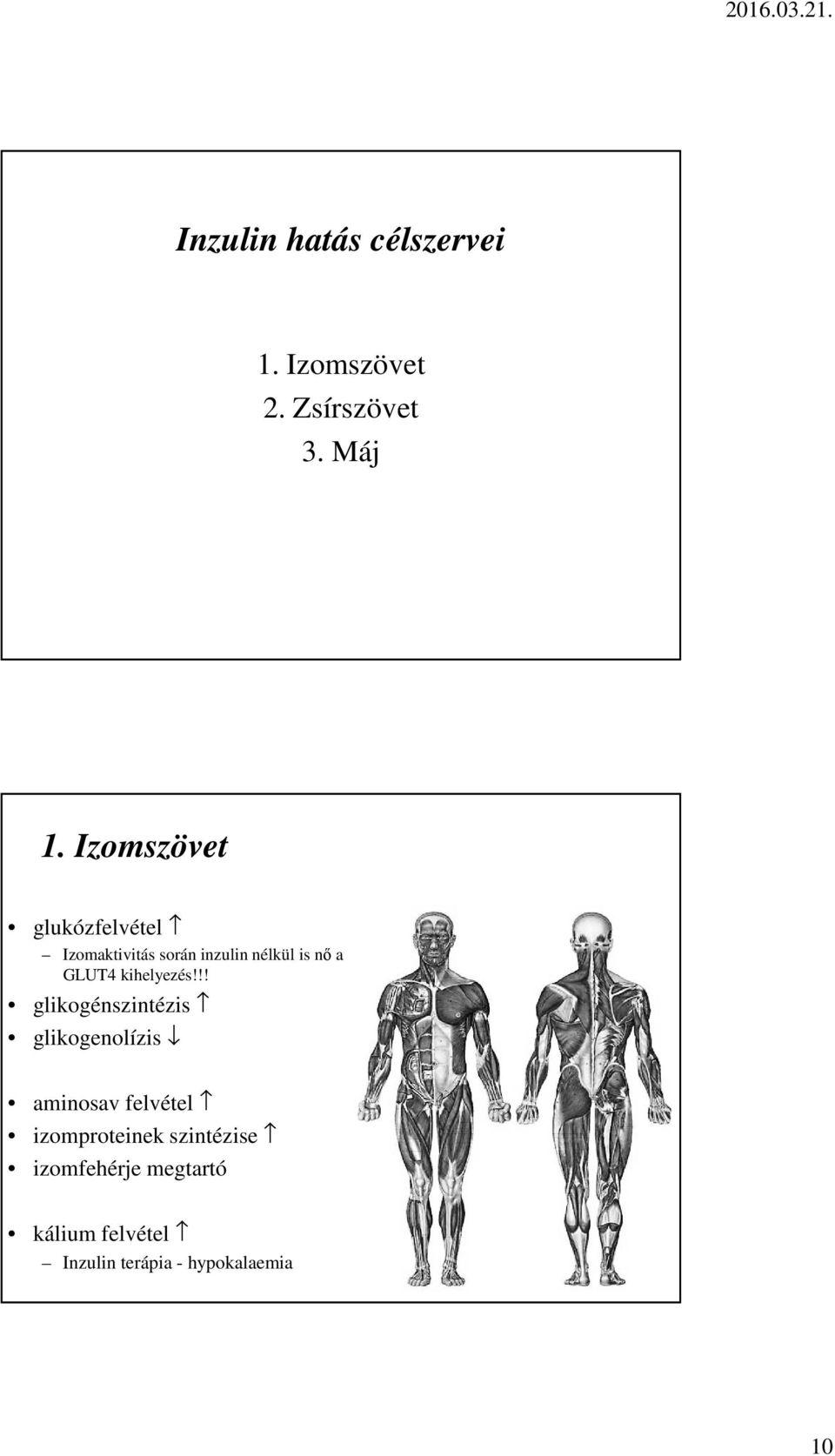 hipertónia célszervei