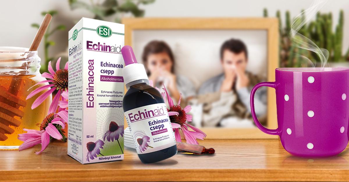 Echinacea, kasvirág kapszula. Kétféle Echinacea kivonatot egyesítő koncentrátum. 30db
