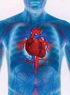 hogyan lehet megtisztítani az ereket a magas vérnyomástól