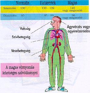 magas vérnyomás emberben