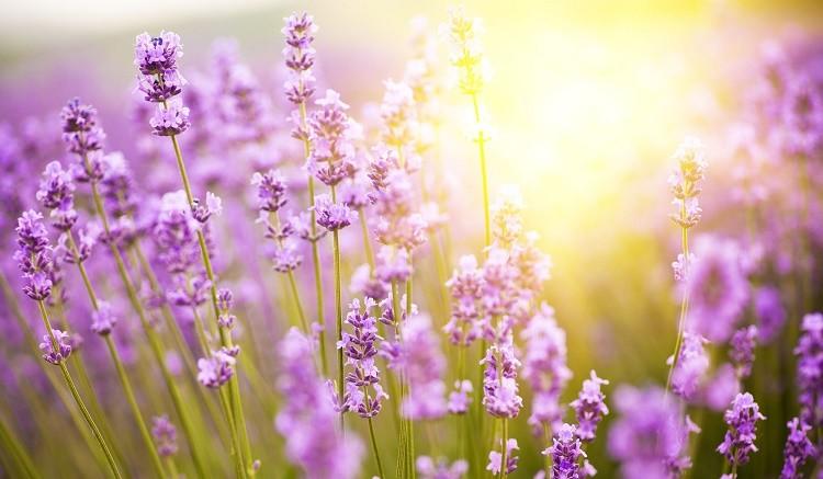tavasz és magas vérnyomás